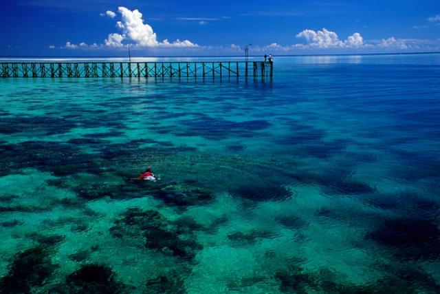 Borneo indonesiano i siti d 39 immersione pi famosi for Siti architetti famosi