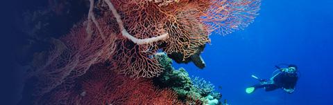 Nunukan palafitte su scogliera di lava biodiversit for Piccoli progetti di palafitte
